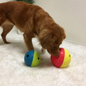 Nuuskimismatid on hea moodus teha koera söömisaeg huvitavaks ja ajutööd kaasavaks. Samuti aitab see koeral vältida toidu kugistamist. Nuuskimine ning oma nina kasutamine on üks koertele kõige loomupärasemaid ning ühtlasi ka meeldivamaid tegevusi. Inimesed on võimelised eristama umbes 5 miljonit lõhna retseptorit, koertel on neid aga umbes 250 miljonit, mis muudab nuuskimismatist maiuste otsimise eriti põnevaks tegevuseks. Nuuskimismatid sobivad ka koertele, kelle liikumine on mingil põhjusel (nt vigastuse tagajärjel) piiratud.